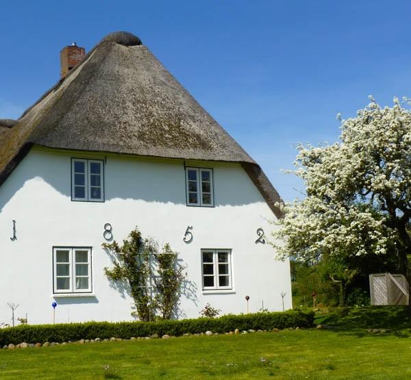 friesenhaus-steenodde-zeschwitz-birnbaumbluete